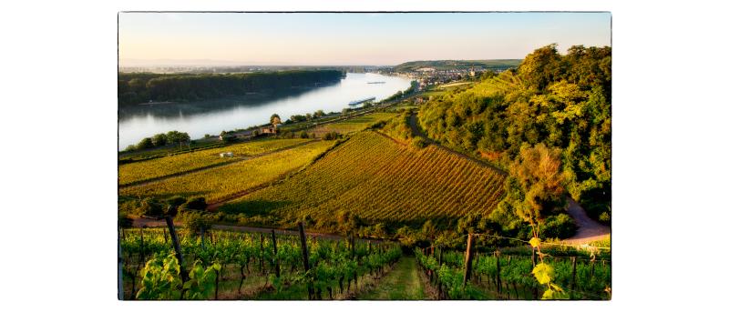 Weinwanderung Am 10. Oktober LEIDER AUSGEBUCHT