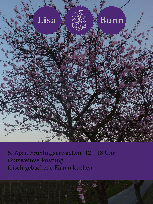 Frühlingserwachen In Nierstein
